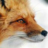 TrickyFox