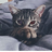Ленивый Кот Евгеха